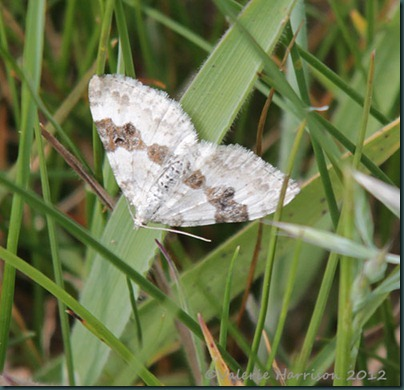 83-Silver-ground-carpet