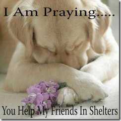 Praying to help friends in shelter