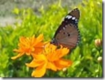 Butterfly-Bees-Insects
