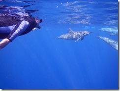ハワイ島ダイビングとドルフィンスイム