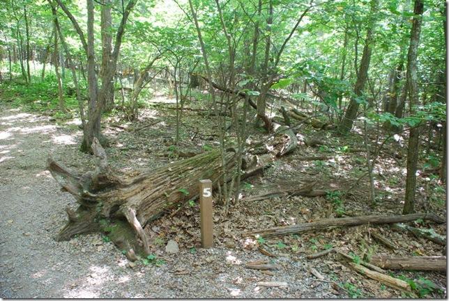 08-24-2011 A Shenandoah NP - Stony Man Hike (6)