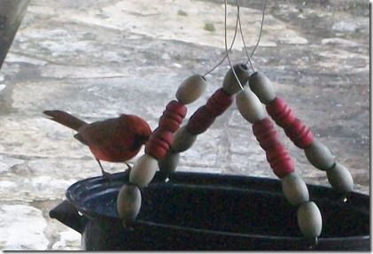 birdfeeder in the rain 021