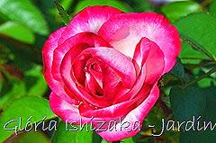 28   - Glória Ishizaka - Rosas do Jardim Botânico Nagai - Osaka