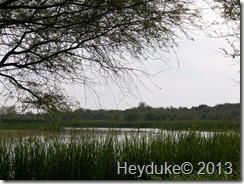 Llano Estero State Park 098