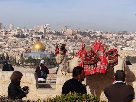 Imagini Palestina: Panorama Ierusalimului
