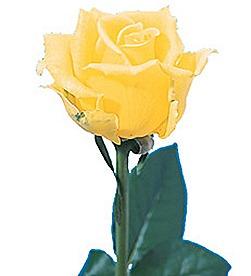 yellow sing
