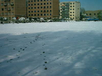 Walking through the snow to my apartment block in the background.