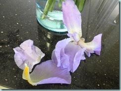 Iris Flowers Mauve