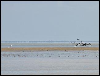18 - wading birds and cormorants