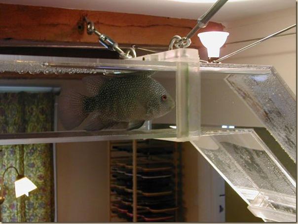 Aquariums créatifs et insolites-014
