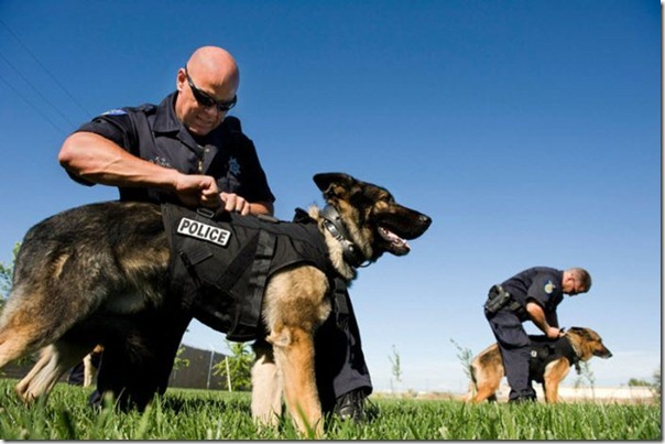 K-9 Policial bom pra cachorro (21)