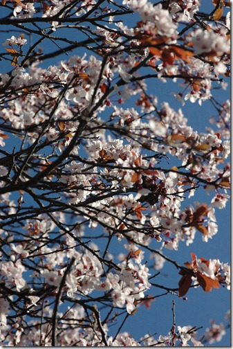 12.03.18 spring walk 001