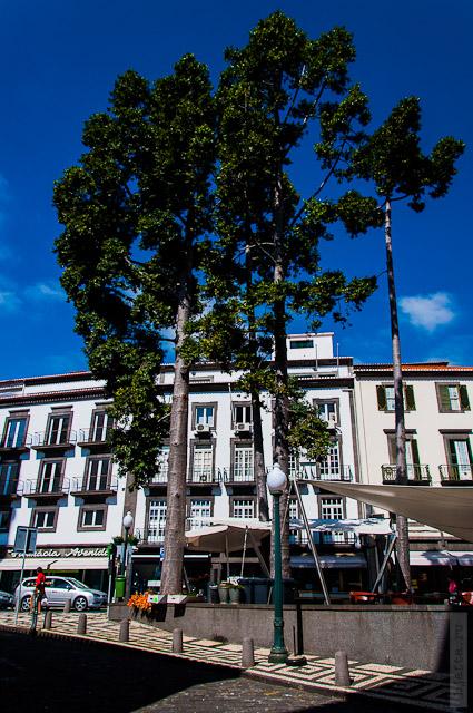 142. Февраль. Мадейра. Фуншал. Улочки города. Даже не знаю что за деревья.