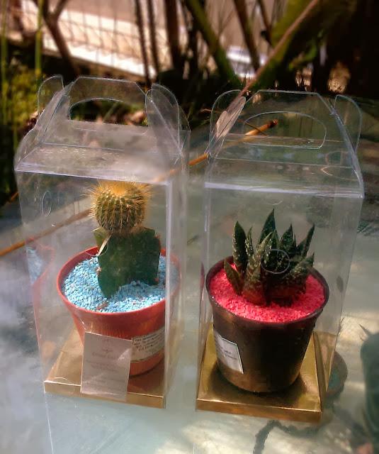 Souvenir pernikahan go green, souvenir tanaman