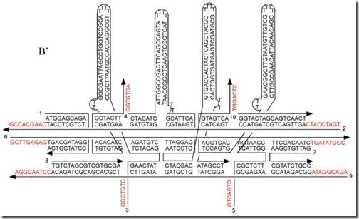 DNA-tiles