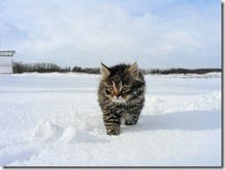 10 -Fotos de gato buscoimagenes (34)
