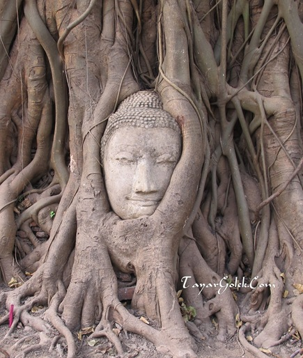 Buddha Head in the Tree Root Ayutthaya