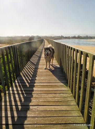 Munson on the boardwalk