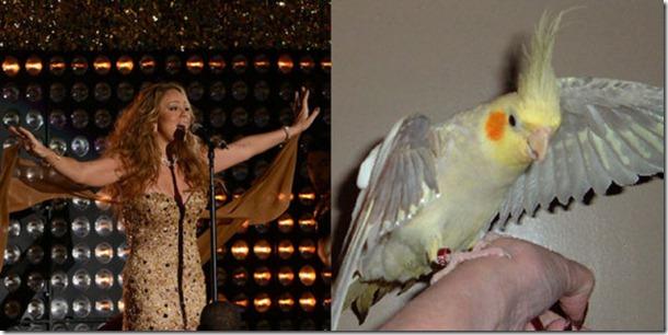pop-stars-birds-20