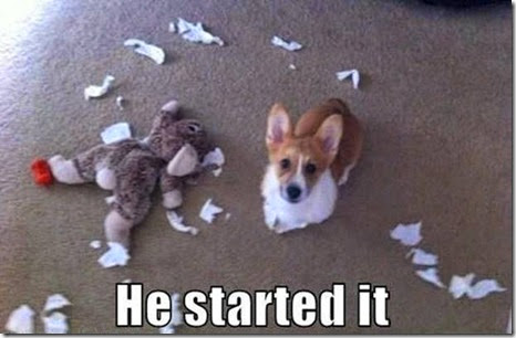 A Corgi in trouble - Copy