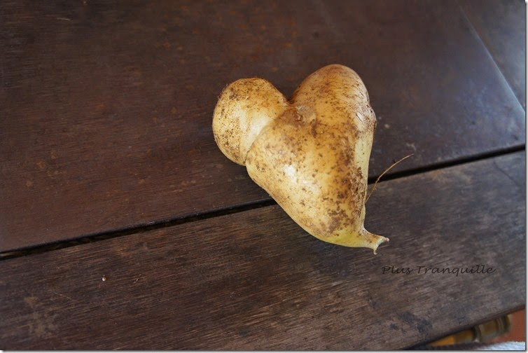 Romantic Potato