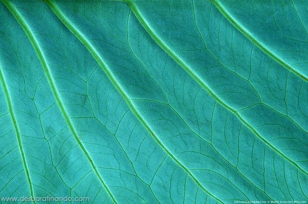 natureze-nature-padrao-pattern-desbaratinando (33)