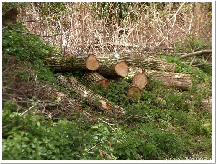 SAM_0129 Logs