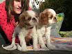 Dezember 2006 Hunde Tanzen Sabine 020.jpg