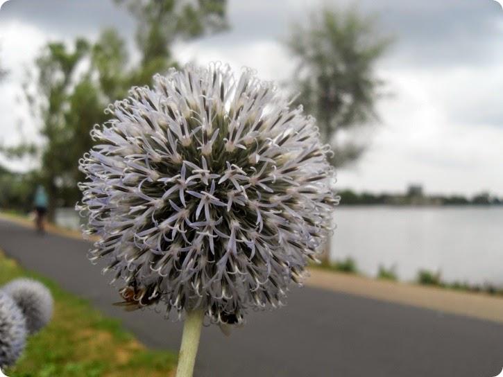 Ved Damhussøen - august 2014