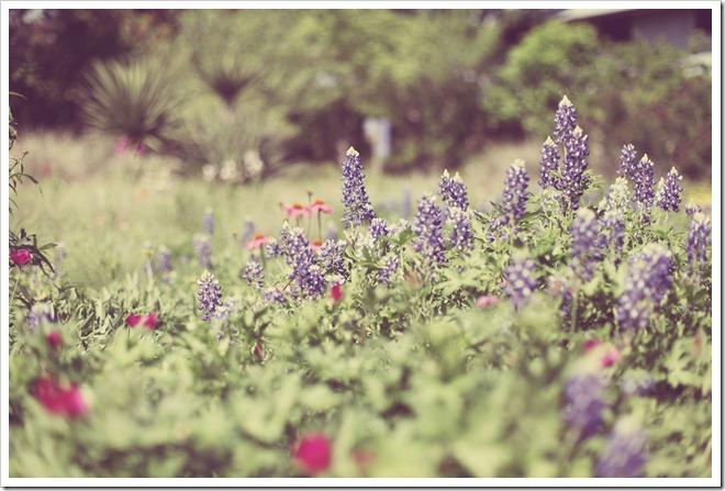 Wildflower Center Apr 2 030-1_edited-1