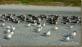 morning sanibel_103