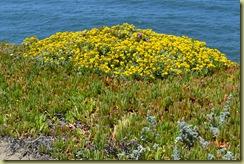 Bodega Head Flowers