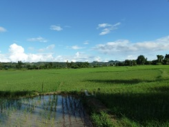 Rice paddies in Northern Thailand, with an experimentation plot in the foreground