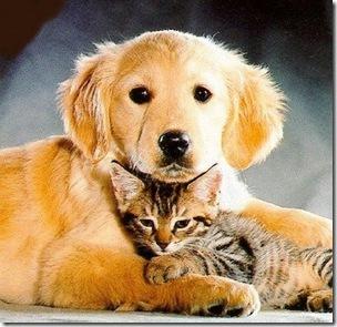 La comunidad responde en forma positiva a la campaña de vacunación de caninos y felinos