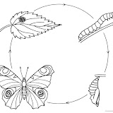 ciclo-de-mariposa.jpg