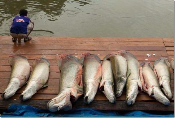 big-fish-fishing-27