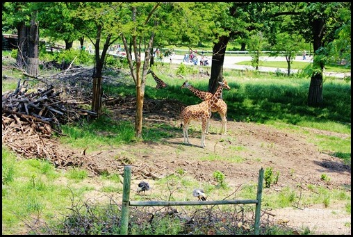 Zoo4 296