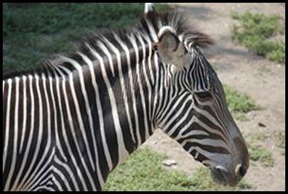 Zoo5 032