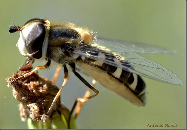 2 mosca 2_DSC8743x1