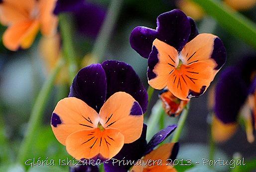 Glória Ishizaka - Primavera 2013 - 6