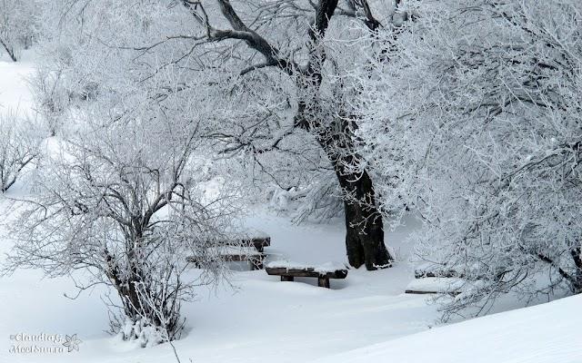 Macin-iarna-16_rw.jpg
