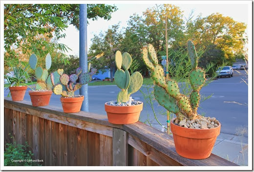 131026_pots-on-front-yard-fence_08