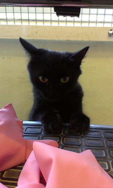 Black cat with pink rubber gloves