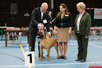 20130510-Bullmastiff-Worldcup-1445.jpg