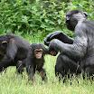 zoo_kolmarden_8893.jpg