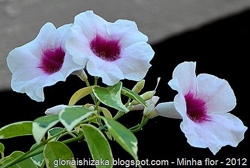 Glória Ishizaka - minhas flores - 2012 - 14