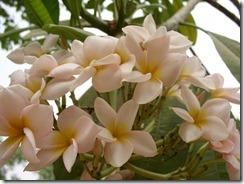 flowers 004