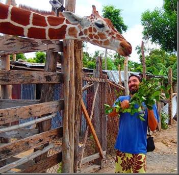 giraffe Calauit Safari park 2