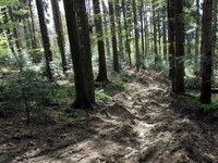 Žalostni sledovi gozdnih del