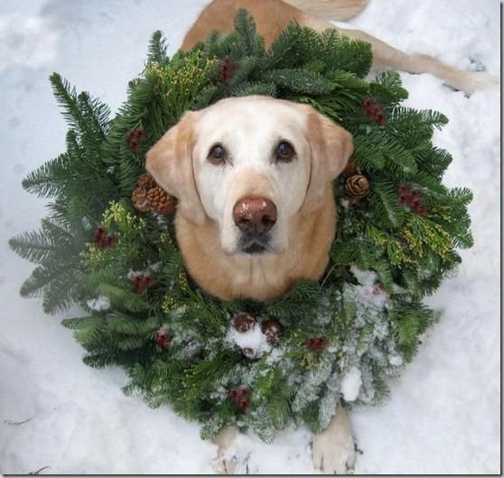perro gorritos navidad (18)